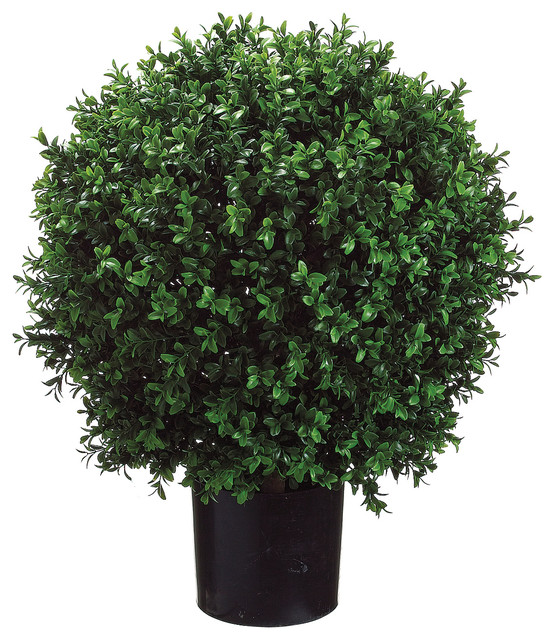 Ball-Shaped Boxwood Topiary in Plastic Pot, Green - Traditional ...