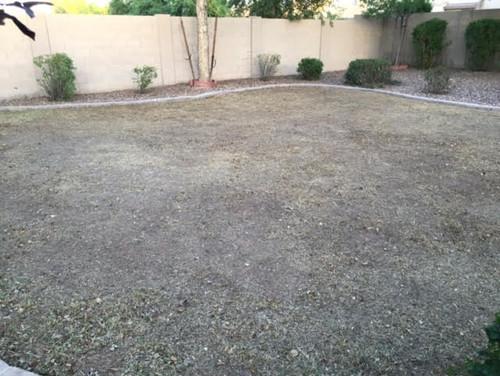 Landscape Rake For Seeding : Do i need to power rake before seeding