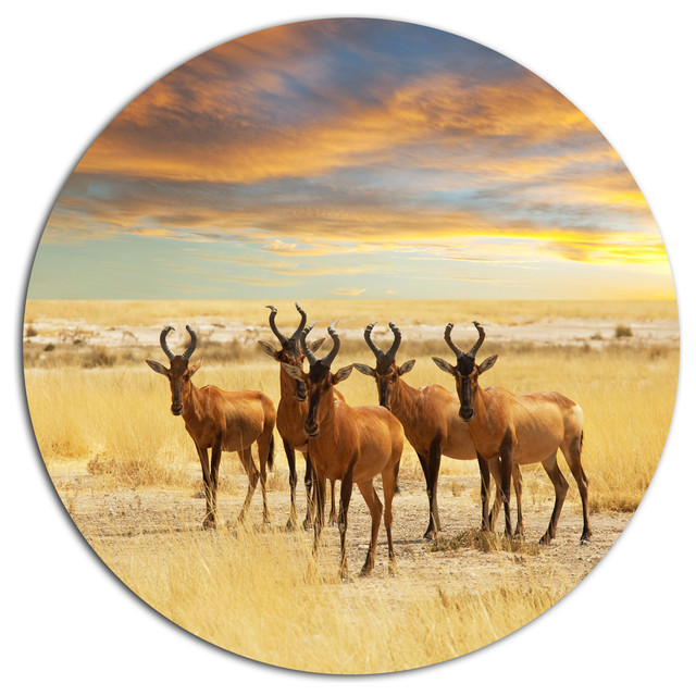 Herd Of Antelope In Grassland, African Disc Metal Artwork