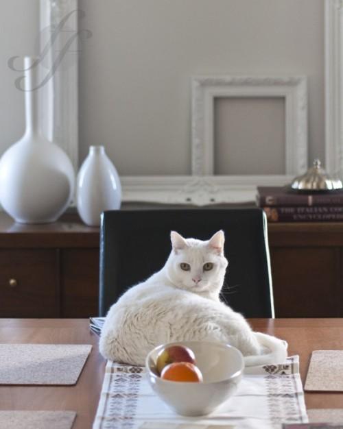 so sch tzen sie bei der weihnachtsdeko auch ihre haustiere bild der frau. Black Bedroom Furniture Sets. Home Design Ideas