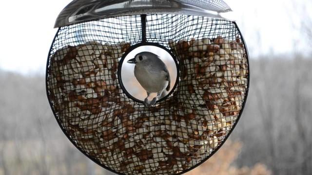 CREATIVE bird feeders