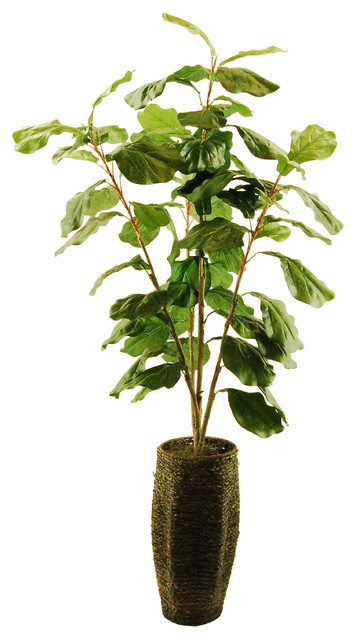 fiddle leaf fig tree scalloped rope basket with spanish moss contemporary artificial - Fiddle Leaf Fig Tree