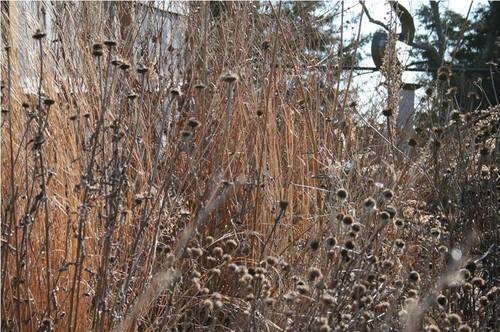 winter ridden plants