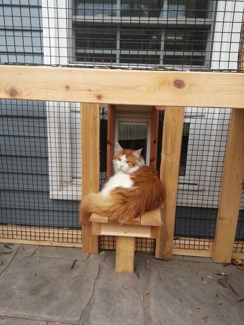 Cedar Cat Enclosure