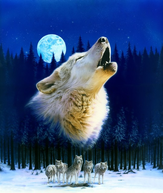 Howling Wolf Variant 1 Poster Print By Robin Koni 24x24
