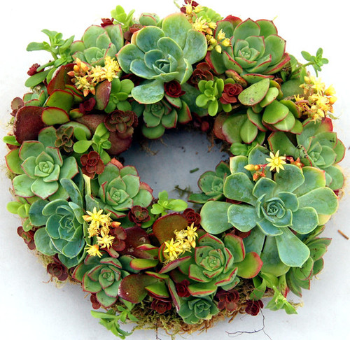 Succulent Wreath Happiness 9 by Fairyscape modern accessories and decor