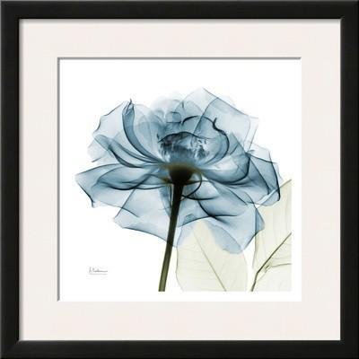 Blue Rose By Albert Koetsier.