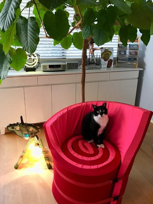 【Houzz】猫と人の幸せな暮らし:イラストレーター石川三千花さん、愛猫ネコゾーと暮らす日々 3番目の画像