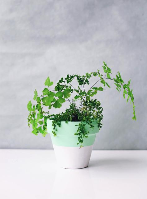 DIY : customisez vos pots de fleurs traditional