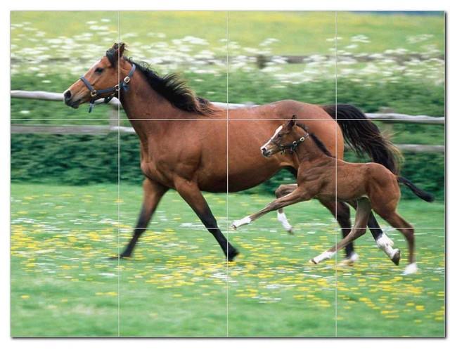 Horse Picture Ceramic Tile Mural Kitchen Backsplash Bathroom Shower, 405289-M43