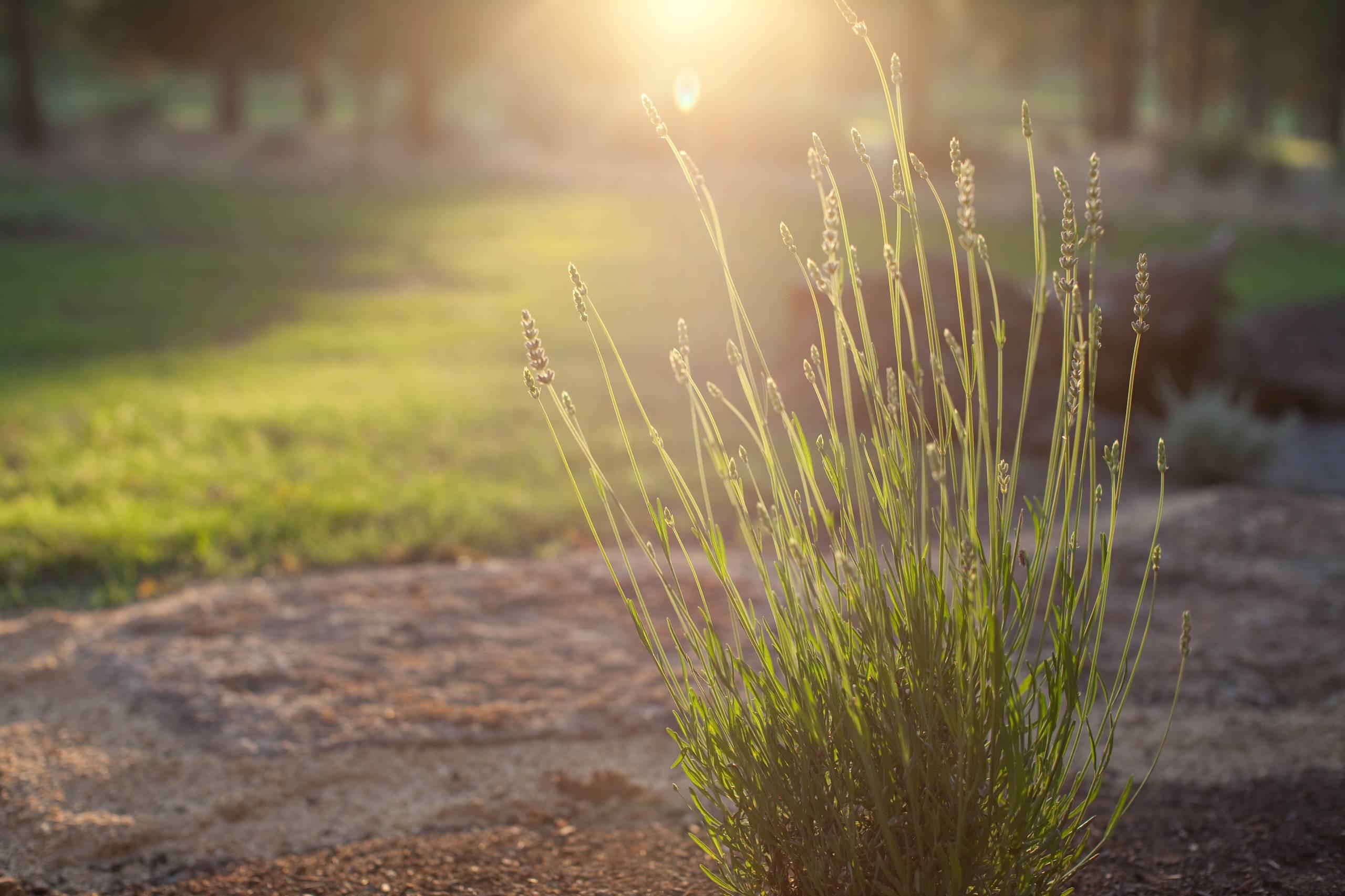 Plants in Focus