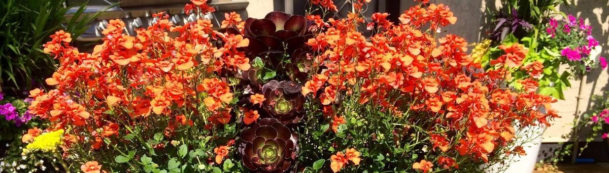 Garden Design Victoria Bc imagine garden design & landscapes - victoria, bc, ca v8z 4l1
