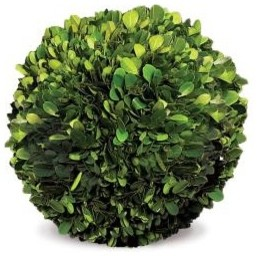 GHN_FREEZE DRIED TOPIARY 8_04