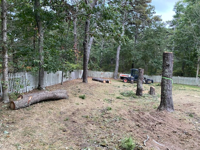 Tree work (In Progress Photos)  - Eastham Ma