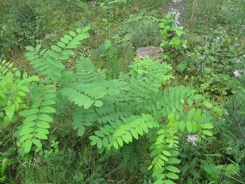 Cómo regar nuevos árboles, arbustos y otras plantas | Tomlinson Bomberger