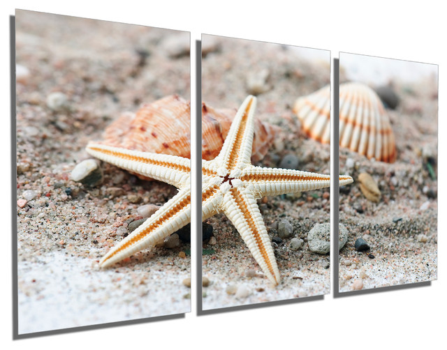 Starfish And Seashell Metal Print Wall Art 3 Panel Split Triptych 48x24