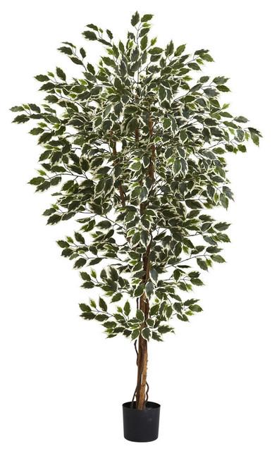 6' Hawaiian Ficus Tree With 1008 Lvs