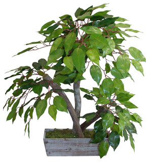 mini ficus tree in wood planter - contemporary - artificial plants
