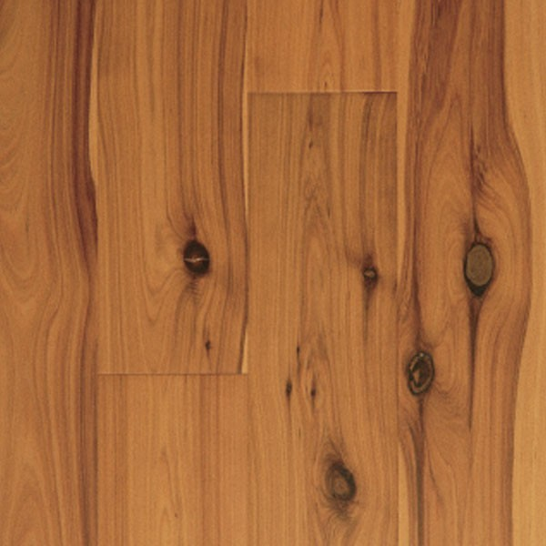 7 5 smooth golden australian cypress engineered hardwood flooring sample contemporary - Australian cypress hardwood ...