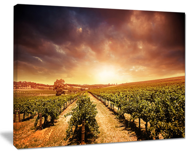 Vineyard With Stormy Sunset\