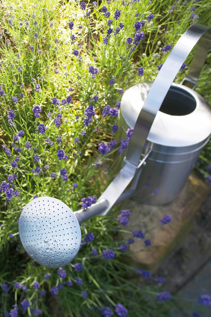 Aguo Watering Can, 169 Oz