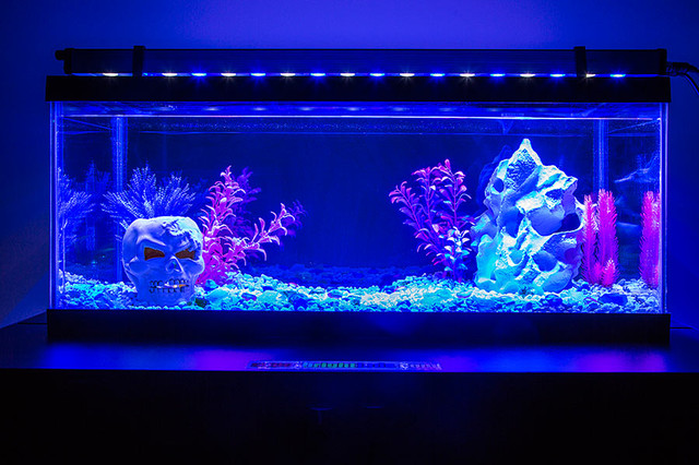 Led aquarium and fish tank lighting for 13x13 living room decorating ideas