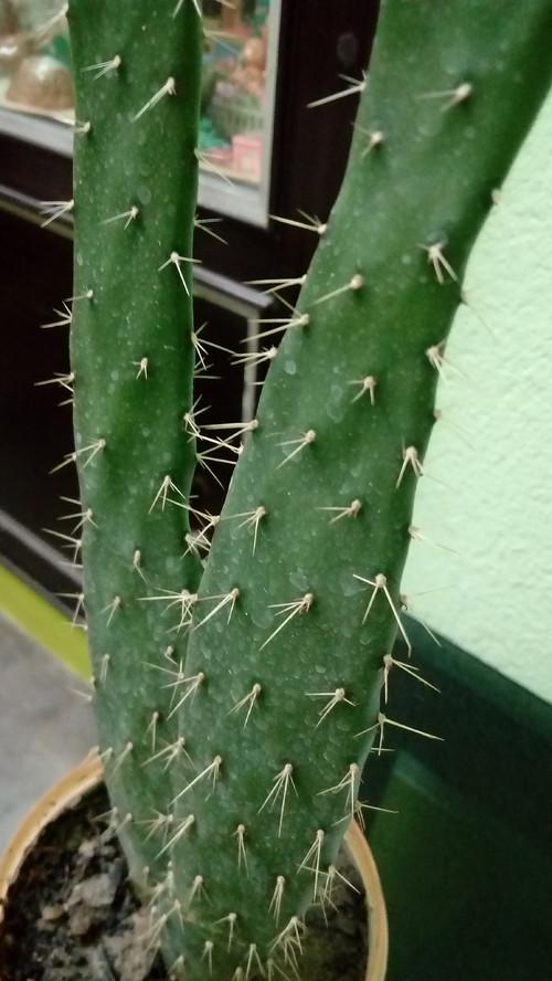 Cactus Identification