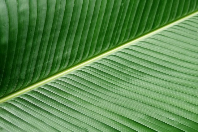 Green Banana Leaf Texture Peel And Stick Removable