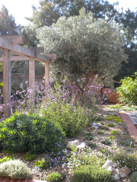 Olive Tree And Mediterranean Planting