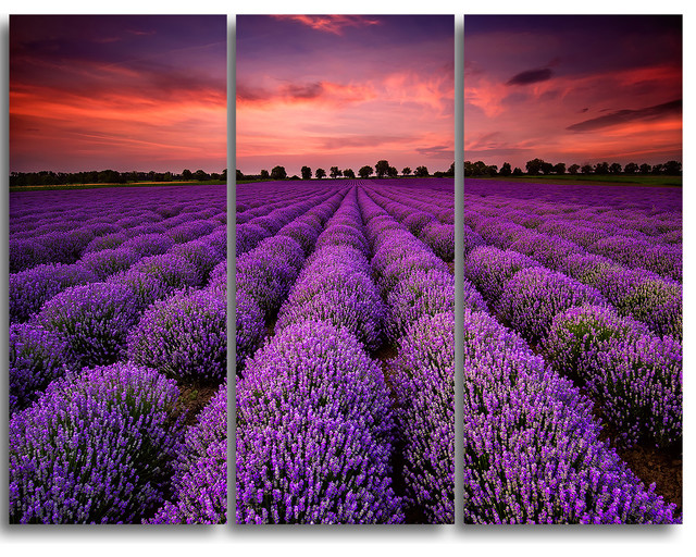 """red Sunset Over Lavender Field"" Wall Art, 3 Panels, 36""x28""."