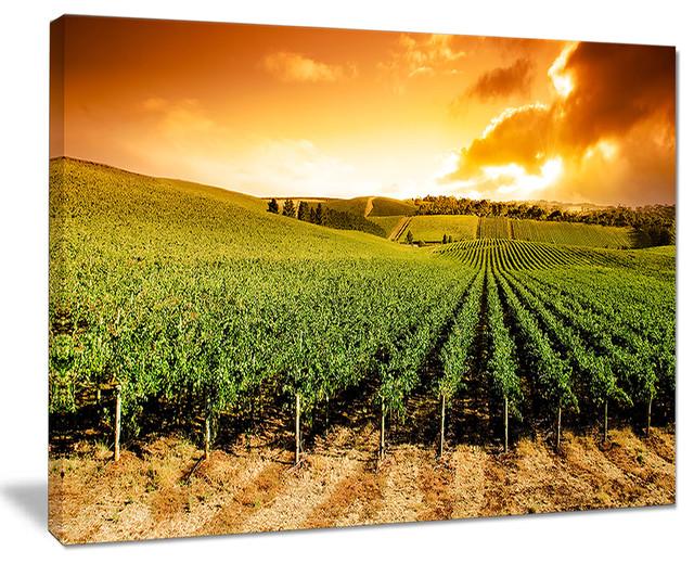 Sunset Vineyard Panorama\