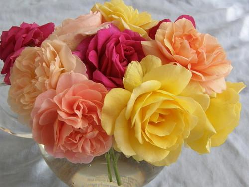 Aprenda acerca de las Rosas Resistentes a las Enfermedades