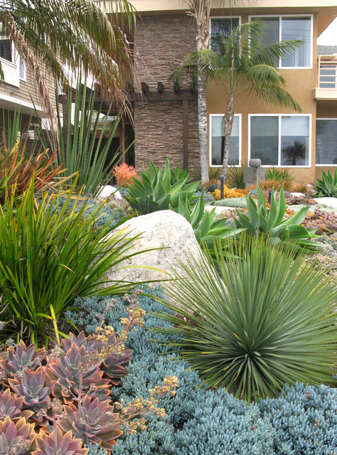 Seaside Colorful Succulent Garden Contemporary San Diego By