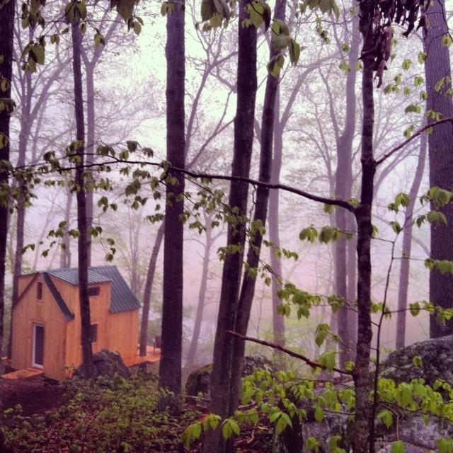Wee House Tree House