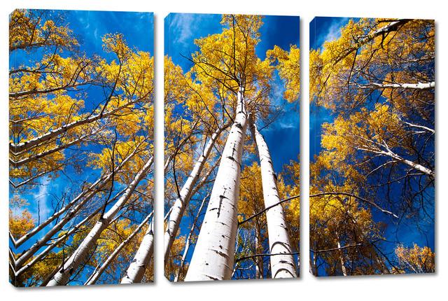 aspen trees and blue skies canvas print 3 panel split triptych wall art