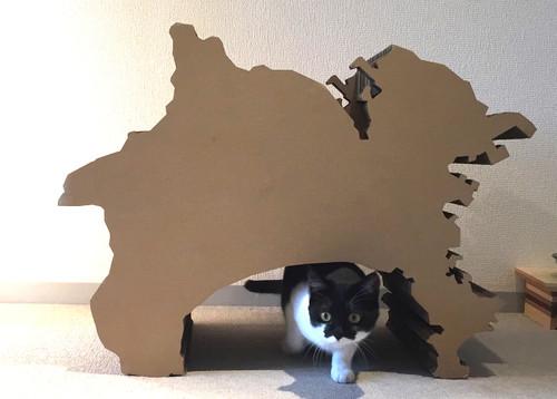 【Houzz】猫と人の幸せな暮らし:「福を招く猫」千葉ちゃんと「猫と建築社」の日常 11番目の画像
