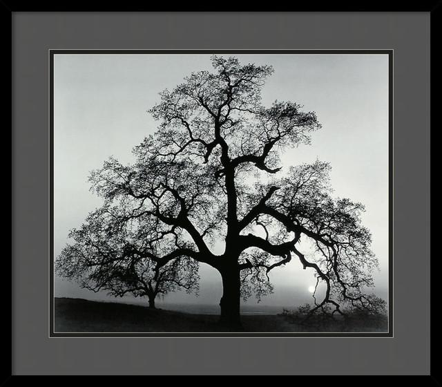 Oak Tree Sunset City California 1962 Framed Print By Ansel Adams