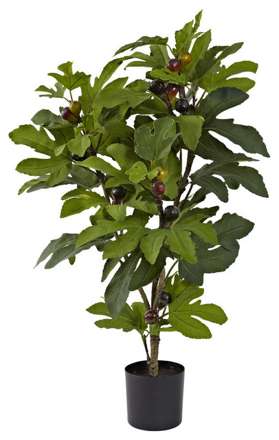 32' Fig Tree With 42 Leaves and 15 Figs