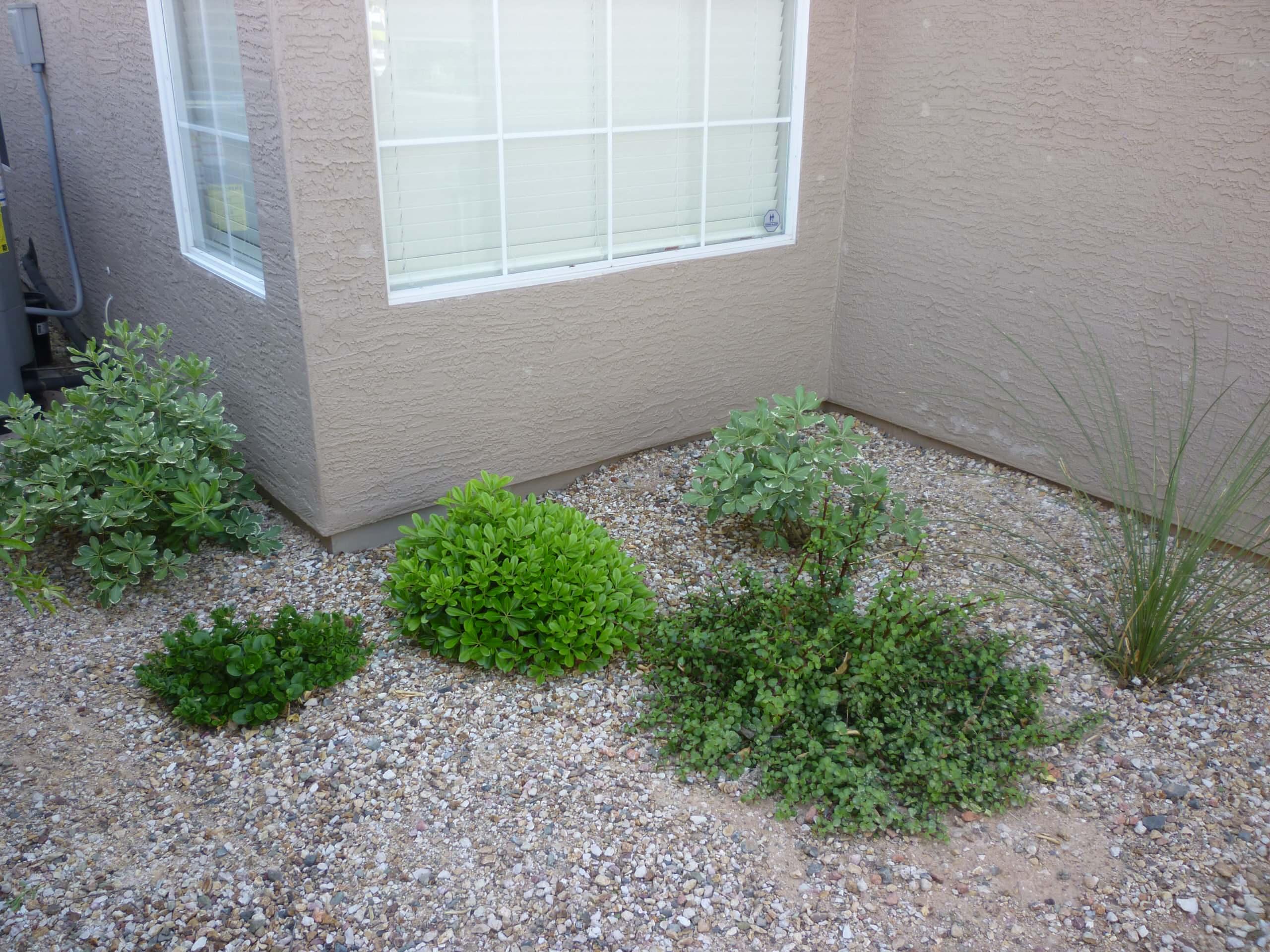 Plantings - 1.5 Years