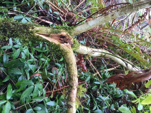 Utilizar plantas tolerantes a la sombra en las áreas que rodean a los árboles - Midland Reporter-Telegram