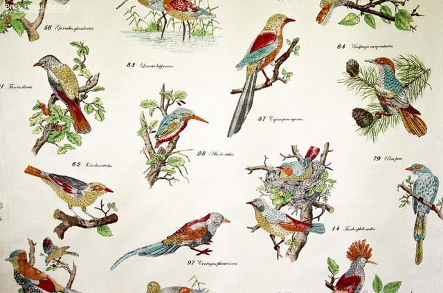 Bird Species Fabric Document Script Nature Print Eclectic