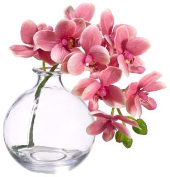 Silk phalaenopsis orchid in glass vase pink traditional silk phalaenopsis orchid in glass vase pink mightylinksfo
