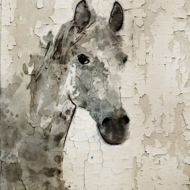 Grey horse canvas print by irena orlov