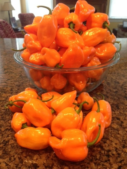recipe: how many habaneros in a pound [25]