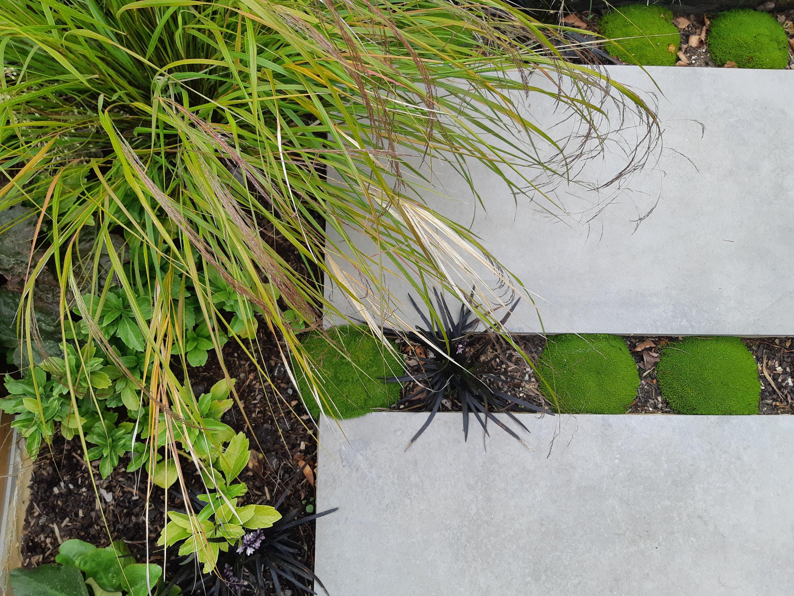 Foster Contemporary Garden