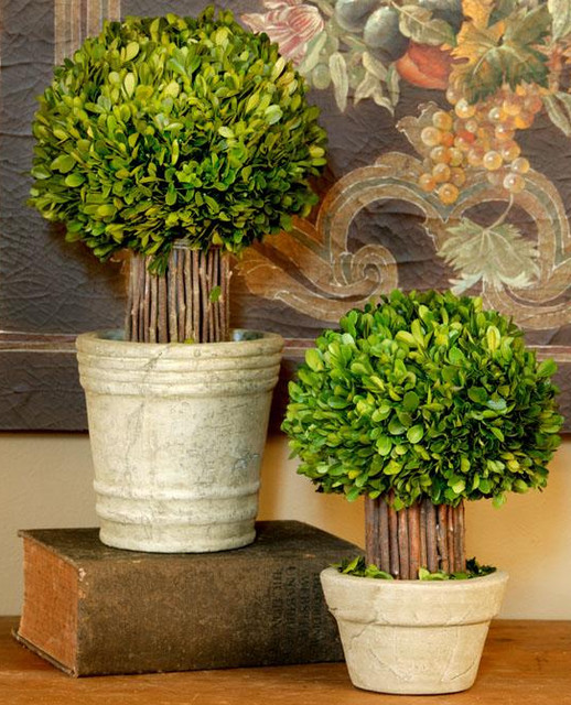 Small Hedged Boxwood Topiary