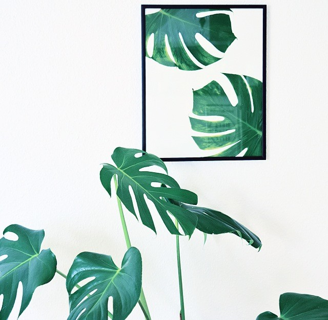 DIY: Monstera plakat nordico
