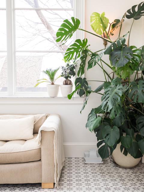 8 der schönsten großen Zimmerpflanzen fürs Wohnzimmer