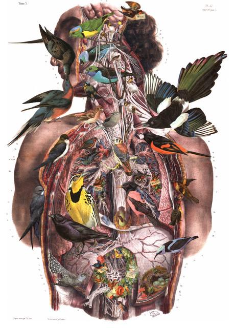 """Suet"""" Altered Art Paper Collage, Vintage Bird and Anatomy"""