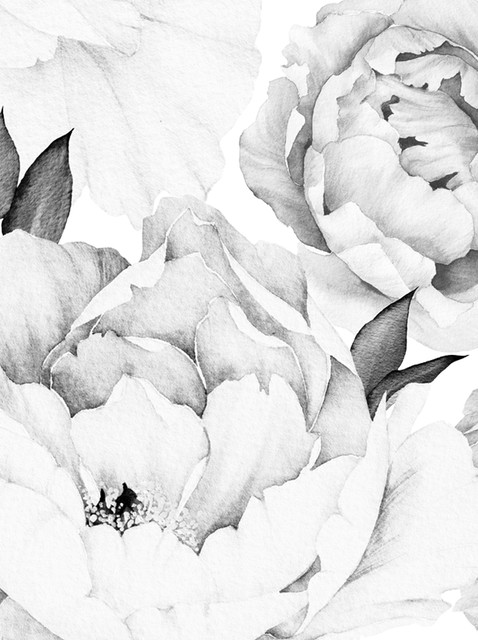 Peony Flower Mural Wall Art Wallpaper, Peel and Stick, Black & White, 24x96 by Accentuwall